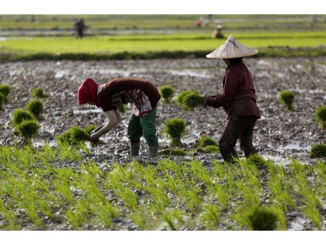 Calculator salarii | Fermierii caută muncitori români și găsesc nepalezi