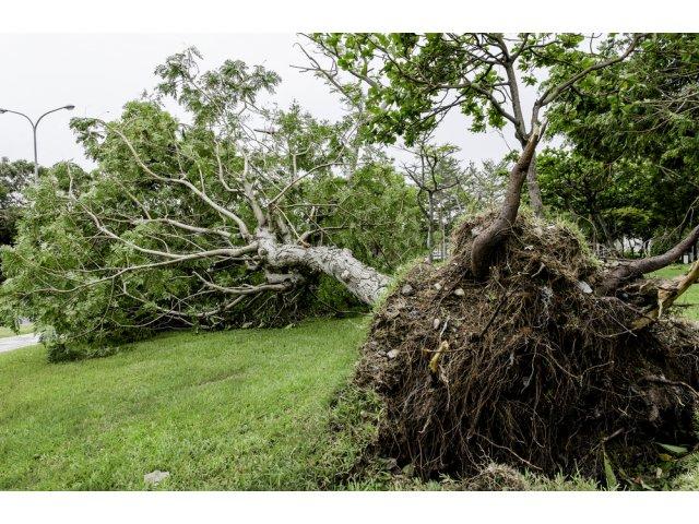 Furtuna a făcut ravagii în Botoșani! Șase mașini avariate, patru case...