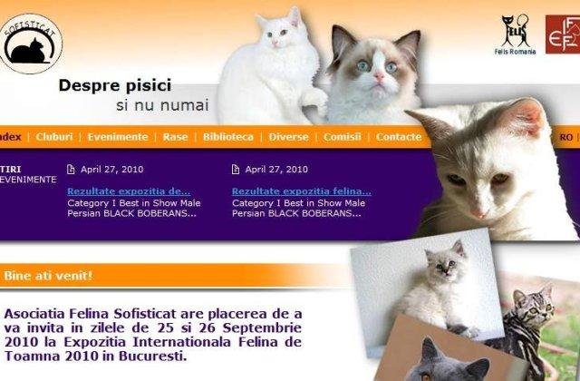 Participare record la expozitia felina de toamna SofistiCAT
