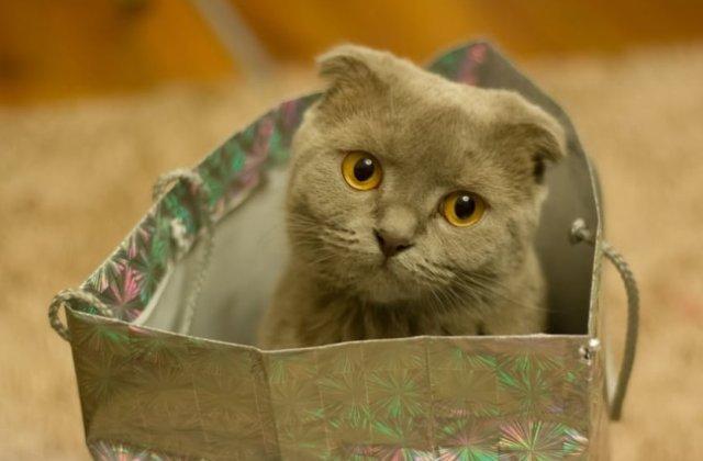 Te vei indragosti intr-o secunda! Cele mai simpatice pisici, in ipostaze adorabile