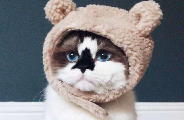 [FOTO] 450.000 de oameni s-au indragostit de aceasta pisica. Uite de ce
