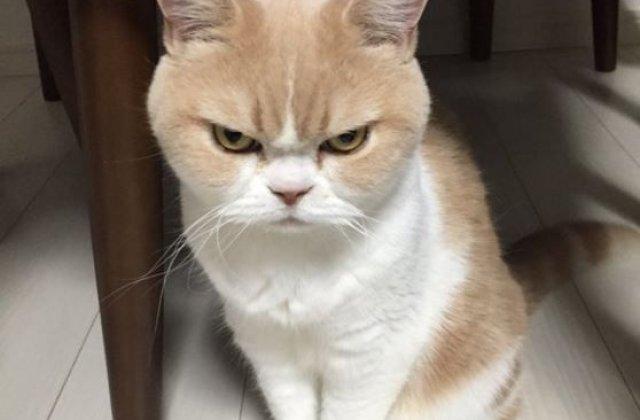 12 imagini amuzante cu pisici fioroase, surprinse exact la momentul potrivit