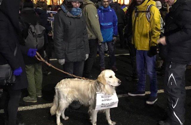 Aproximativ 3.000 de persoane in Piata Victoriei, in cea de a douasprezecea zi de proteste. La Palatul Cotroceni, peste 400 de oameni au cerut demisia presedintelui