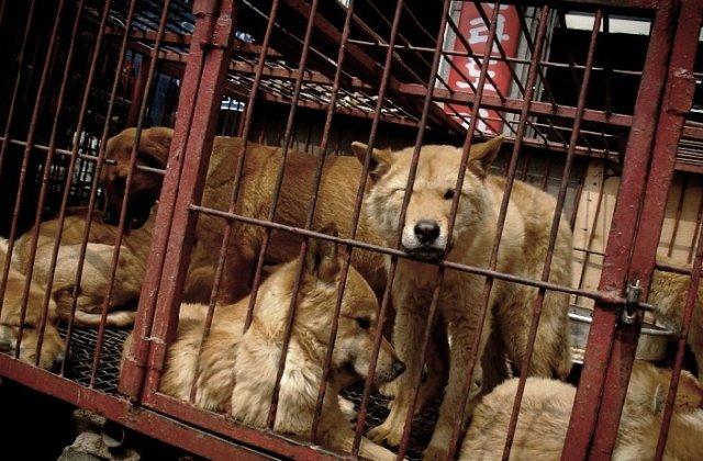Cea mai mare piata de carne de caine a fost inchisa