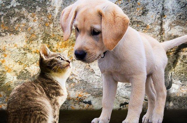 Top 10 diferente notabile intre iubitorii de caini si cei de pisici