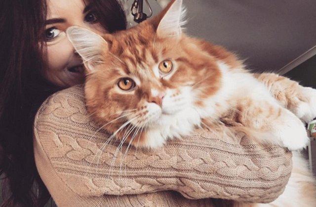 """Omar, probabil cea mai lunga pisica din lume, a devenit """"vedeta"""" pe internet"""