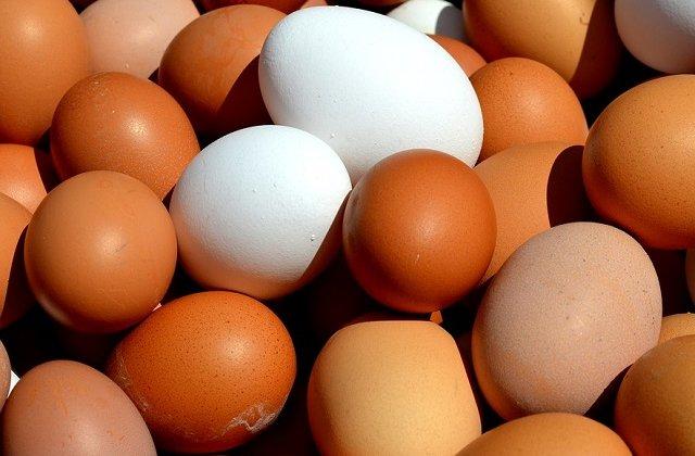 Un nou insecticid a fost descoperit in oua. Este toxic