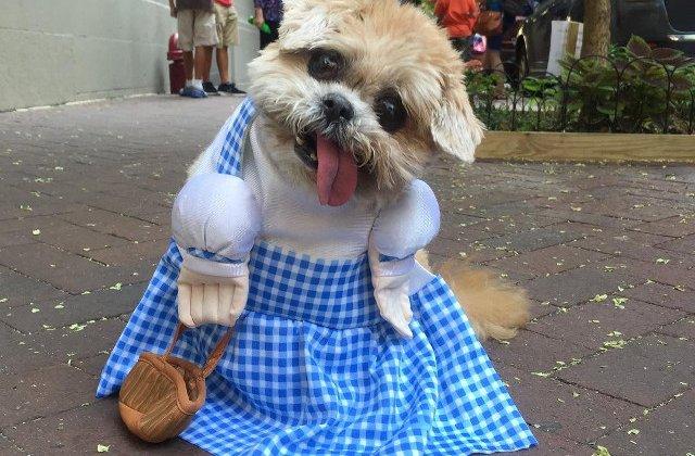 Marnie, catelul care scoate limba mereu