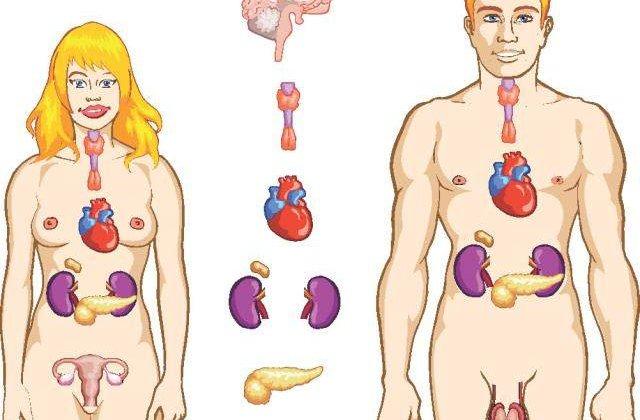 Cum sa ne reglam bioritmul zilnic al organelor interne