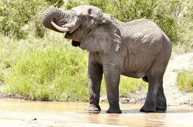 Un elefant, operat de o echipa de 30 de stomatologi, in Columbia / VIDEO