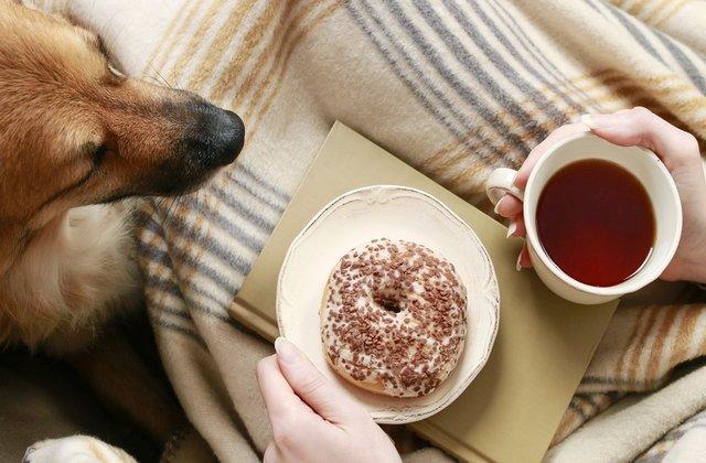 7 lucruri banale din casa ta care iti pot imbolnavi animalul de companie