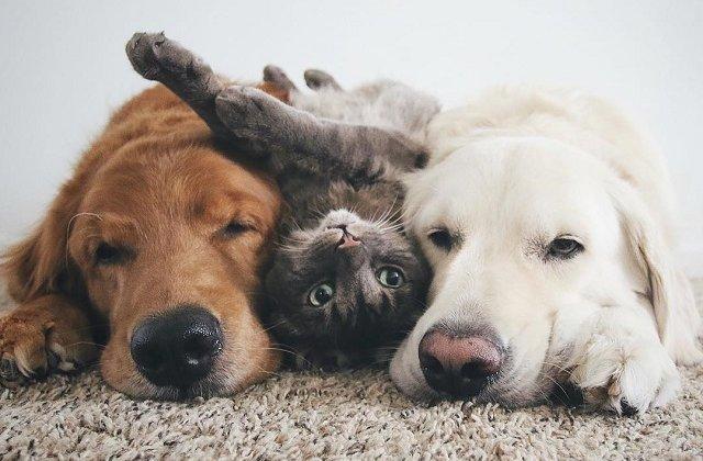 Cum arata prietenia dintre un caine si o pisica?