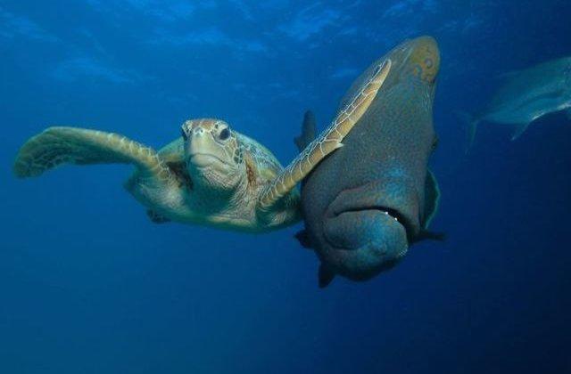 Natura are simtul umorului! Cele mai amuzante fotografii cu animale