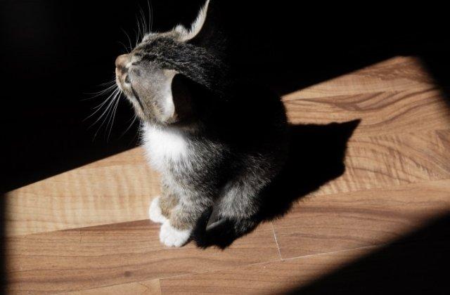 Motivul pentru care pisicile te urmaresc la baie