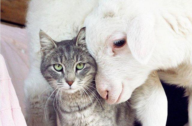 Prietenia nu tine cont de... specie. 10+ imagini care demonstreaza ca animalele sunt mai iubitoare decat oamenii