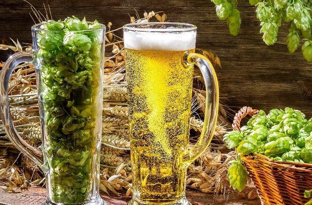 Efectele benefice ale hameiului, aurul verde al berii