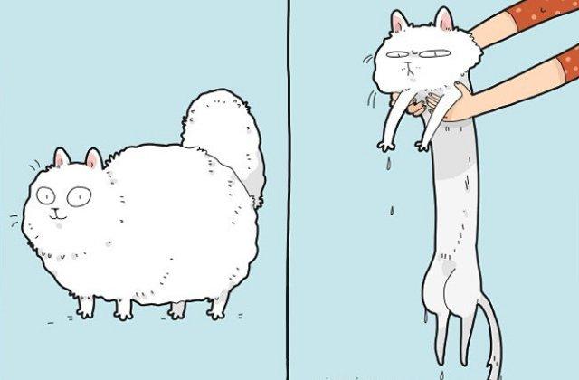 10 ilustratii comice ce demonstreaza ca pisicile au prea multa personalitate