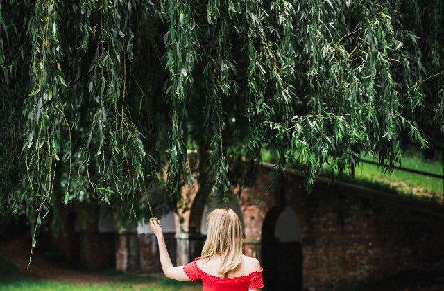Obiceiuri de Florii: Ramura de salcie sfintita, folosita si in scopuri terapeutice