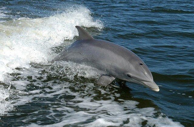 Pui de delfin mort, gasit pe digul din Eforie Sud/ VIDEO