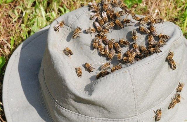 Buzau: Doua persoane au murit, iar o a treia dusa la spital, dupa ce au fost intepate de albine
