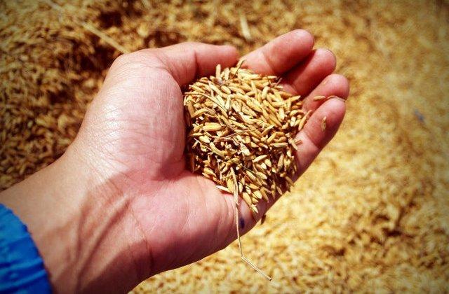 8 cereale pe care ar trebui sa le consumi mai des daca vrei sa slabesti