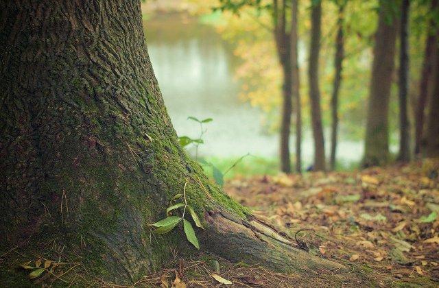 O adolescenta din Zalau a fost gasita spanzurata de un copac