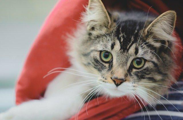 O pisica a fost trimisa din greseala, intr-un colet, la 1.100 de kilometri de casa
