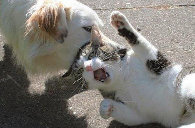 10+ fotografii care surprind relatia cu nabadai dintre caini si pisici