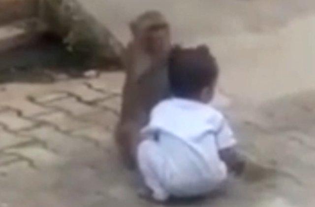 O maimuta a rapit un copil de doi ani, pentru a se juca cu el / VIDEO