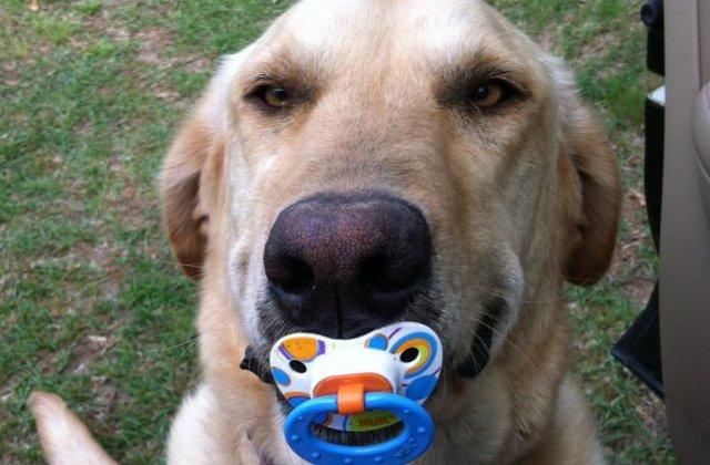 Animale de companie care nu contenesc sa surprinda: 15 momente in care stapanii au primit cadouri neasteptate