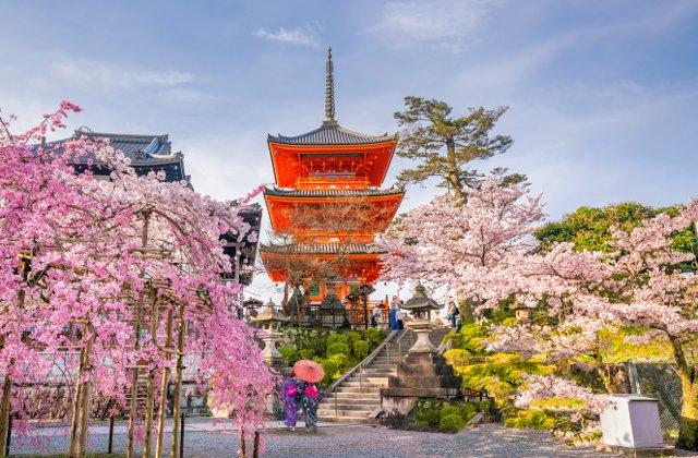 Cum transforma primavara orasele din Japonia: 10+ imagini de poveste