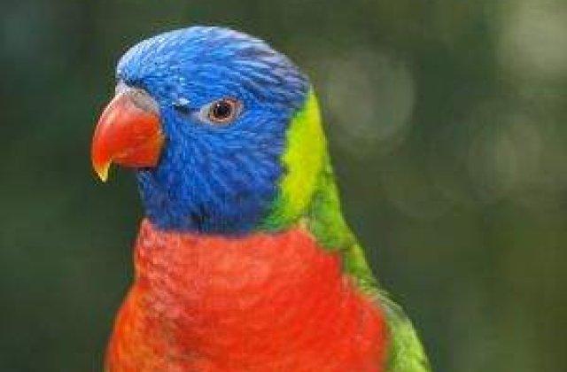 Un papagal ratacit le-a spus politistilor adresa exacta