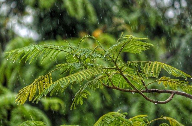 Noua atentionare COD GALBEN de ploi in 13 judete