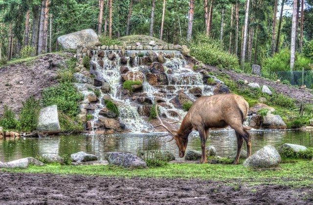 Parcul National Serengeti, ideal pentru excursii de tip safari/ FOTO