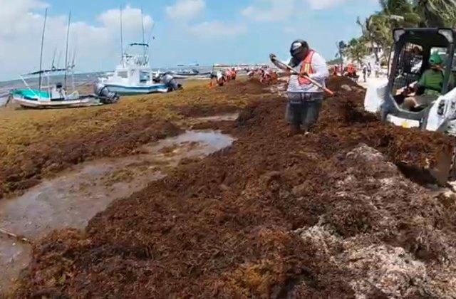 Solutia gasita de Mexic pentru a elimina algele de pe plaje