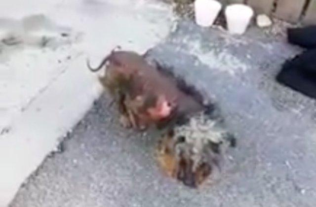 Un bucurestean a fost amendat cu 2.000 de lei pentru ca si-a neglijat catelul/ VIDEO