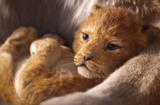 Simba din The Lion King, inspirat de un pui de leu de la o gradina zoologica din Dallas