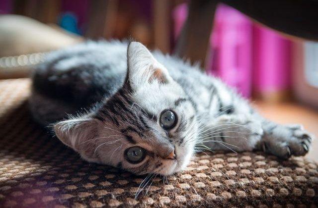 10+ explicatii din spatele celor mai bizare comportamente ale pisicilor
