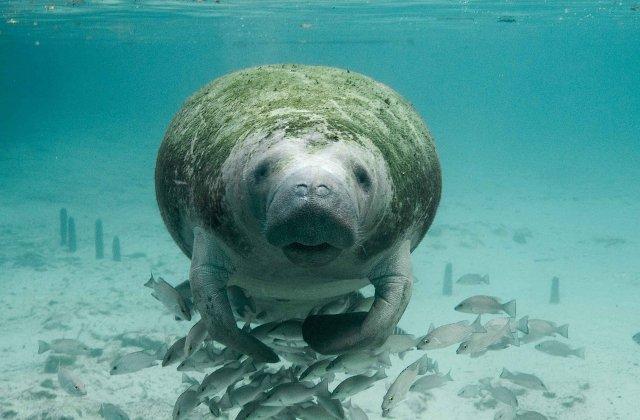 Un pui de dugong, salvat in aprilie pe o plaja din Thailanda, a murit din cauza plasticului ingerat