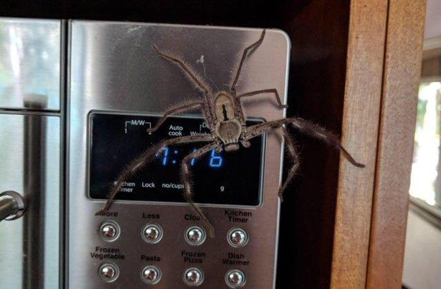 Pun pe fuga pe oricine: 10+ imagini infricosatoare, cum numai in Australia poti intalni