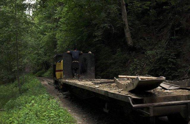Romania ramane fara paduri: Ritmul defrisarilor il depaseste pe cel din tarile africane