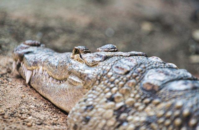 Doi tineri, arestati in Florida dupa ce au dat bere unui aligator