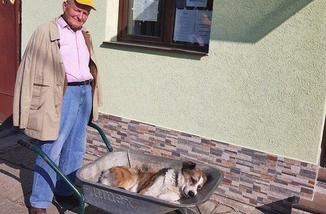 Un batran si-a carat cainele 8 kilometri cu roaba pentru a-l duce la veterinar