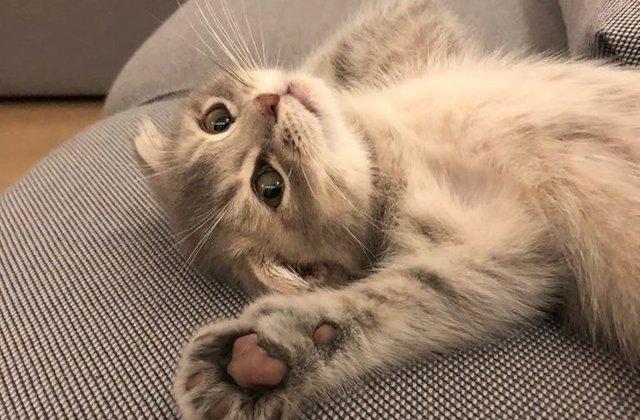 Nu ai cum sa nu le iubesti: 20 de fotografii cu pisici care-ti vor aduce un zambet pe chip