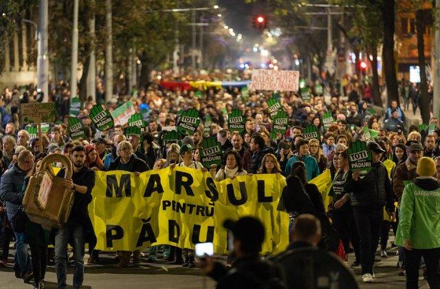 Galusca (Greenpeace Romania): Ministerul habar nu are ce se intampla in padurile din Romania. Situatia este scapata de sub control