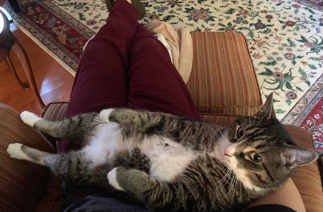 10+ fotografii care demonstreaza ca pisicile nu se opresc niciodata din a-si surprinde stapanii