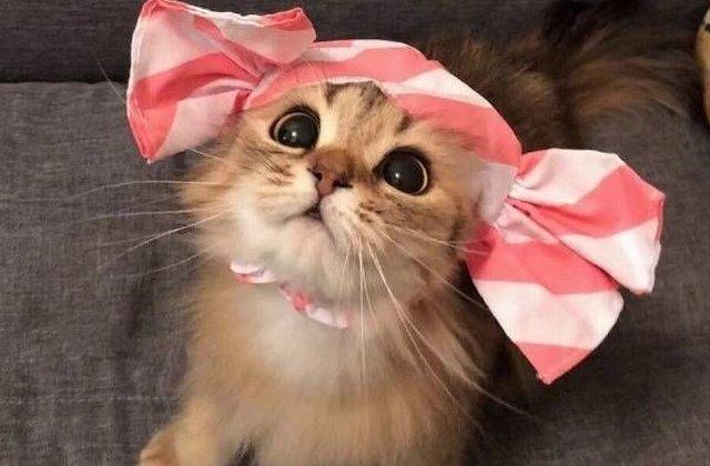 15+ imagini cu pisici care te vor cuceri cu sarmul lor irezistibil