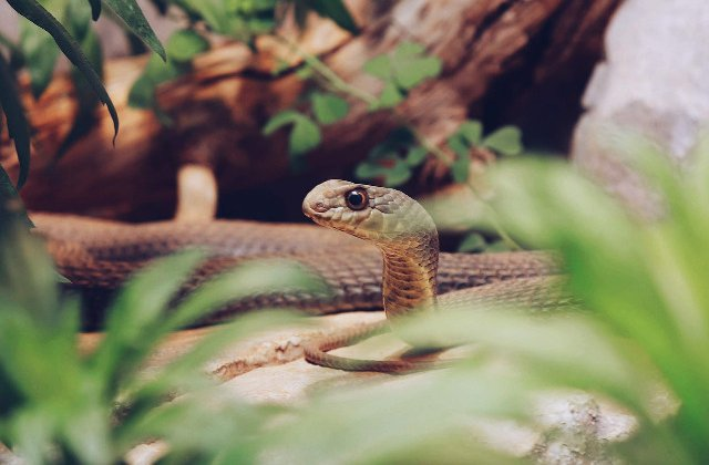 Vindecare, serpi, spirite si magie? 10 lucruri mai putin cunoscute despre voodoo