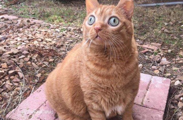 O pisica a devenit celebra gratie privirii hipnotizante/ VIDEO