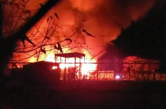 Cel putin 10 animale au murit arse de vii intr-un incendiu izbucnit intr-un parc safari